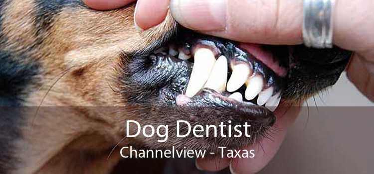 Dog Dentist Channelview - Taxas