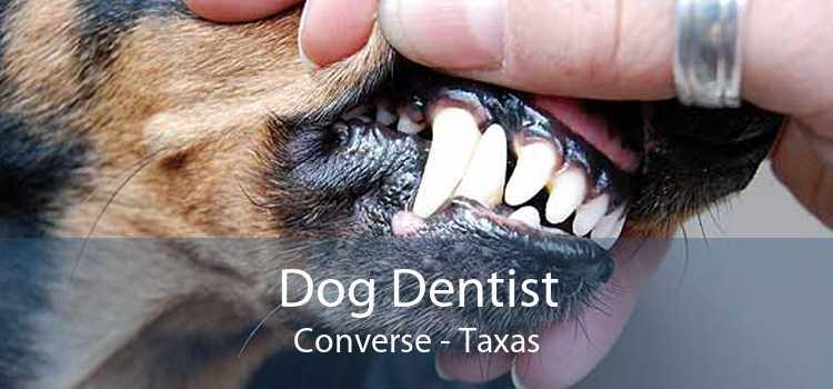 Dog Dentist Converse - Taxas