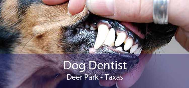 Dog Dentist Deer Park - Taxas