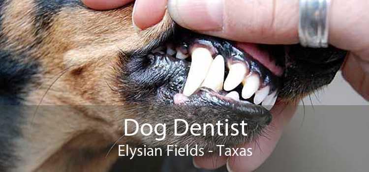 Dog Dentist Elysian Fields - Taxas