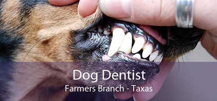 Dog Dentist Farmers Branch - Taxas