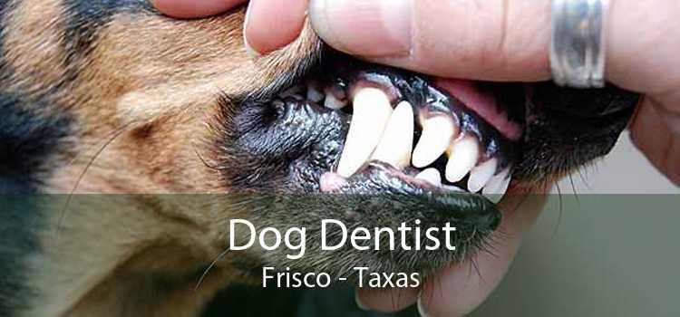 Dog Dentist Frisco - Taxas