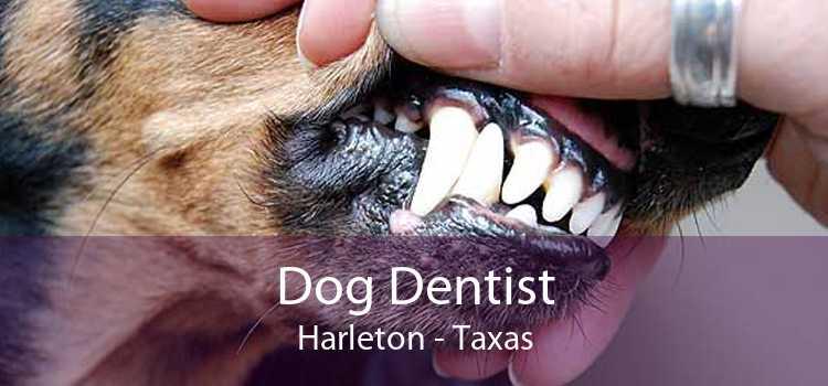 Dog Dentist Harleton - Taxas