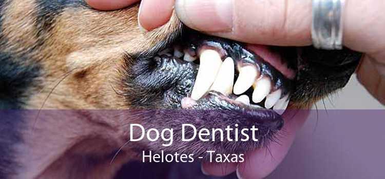 Dog Dentist Helotes - Taxas