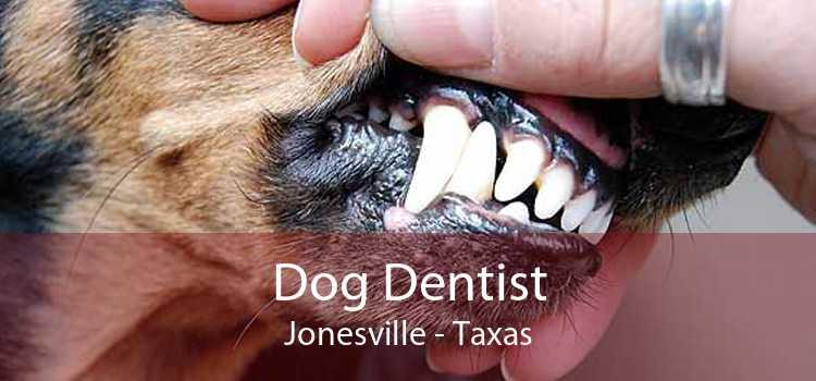 Dog Dentist Jonesville - Taxas