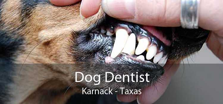 Dog Dentist Karnack - Taxas