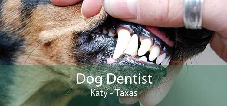 Dog Dentist Katy - Taxas