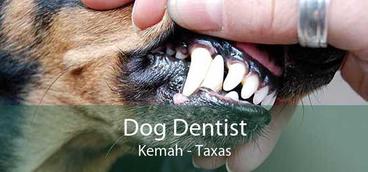 Dog Dentist Kemah - Taxas
