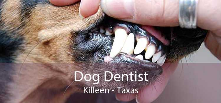 Dog Dentist Killeen - Taxas