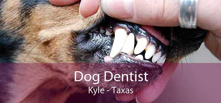 Dog Dentist Kyle - Taxas