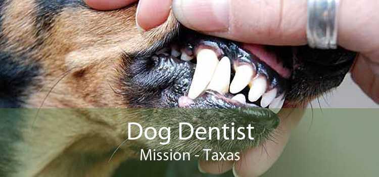 Dog Dentist Mission - Taxas