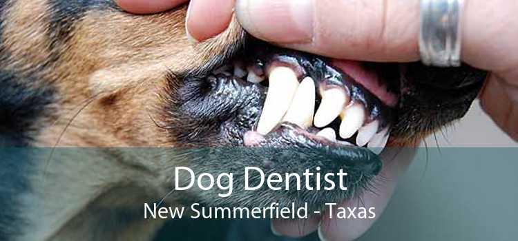 Dog Dentist New Summerfield - Taxas