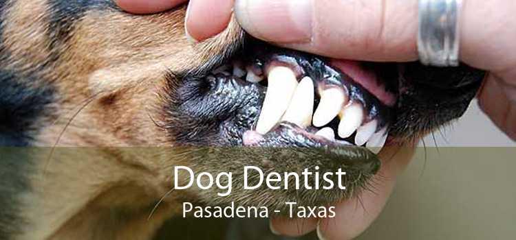 Dog Dentist Pasadena - Taxas