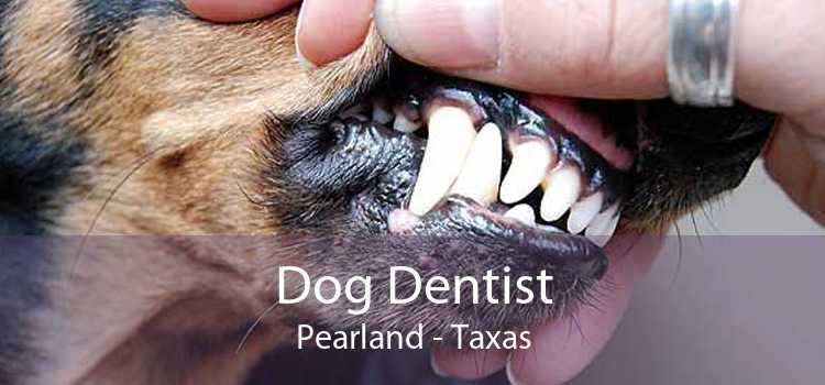 Dog Dentist Pearland - Taxas