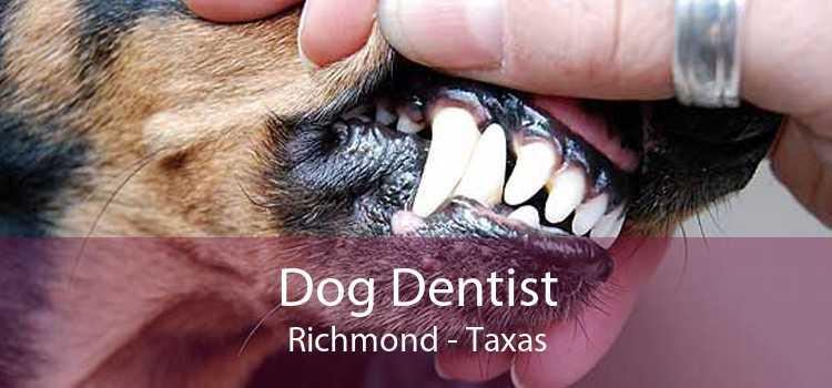 Dog Dentist Richmond - Taxas