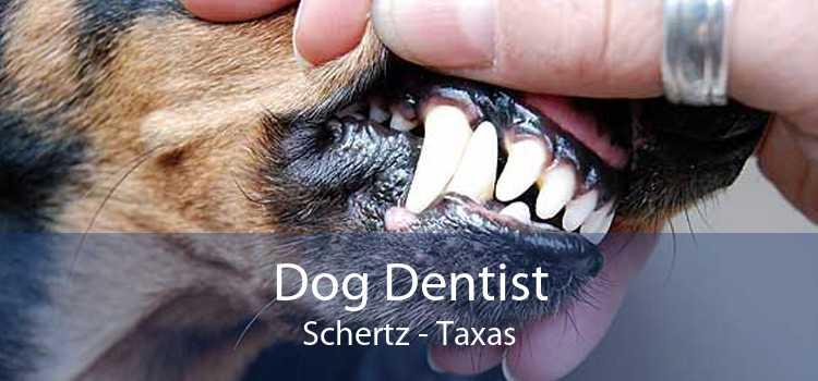 Dog Dentist Schertz - Taxas