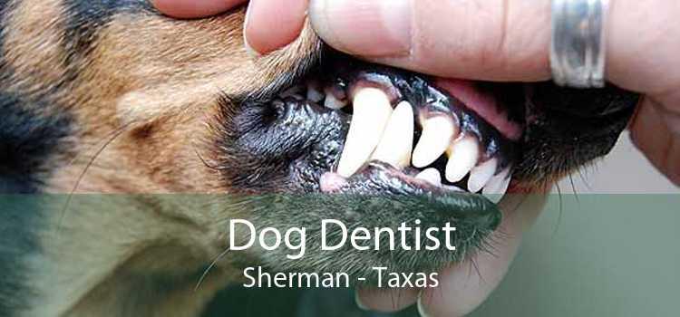 Dog Dentist Sherman - Taxas