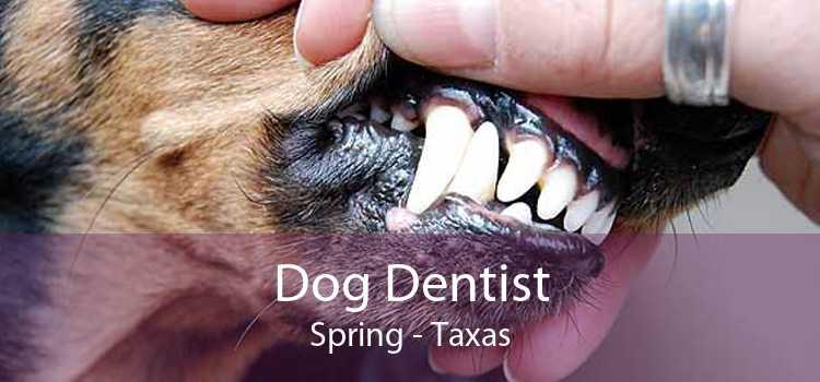 Dog Dentist Spring - Taxas