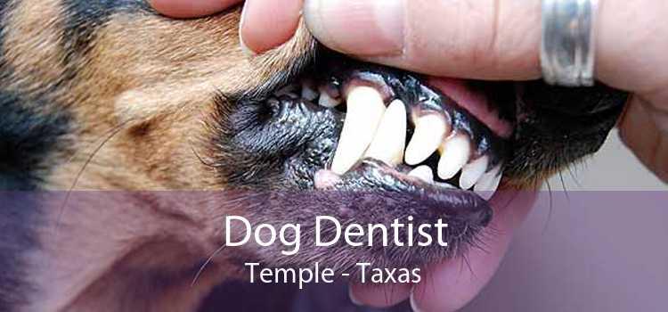Dog Dentist Temple - Taxas