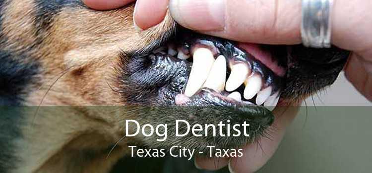 Dog Dentist Texas City - Taxas