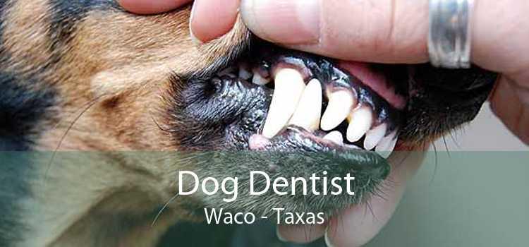 Dog Dentist Waco - Taxas