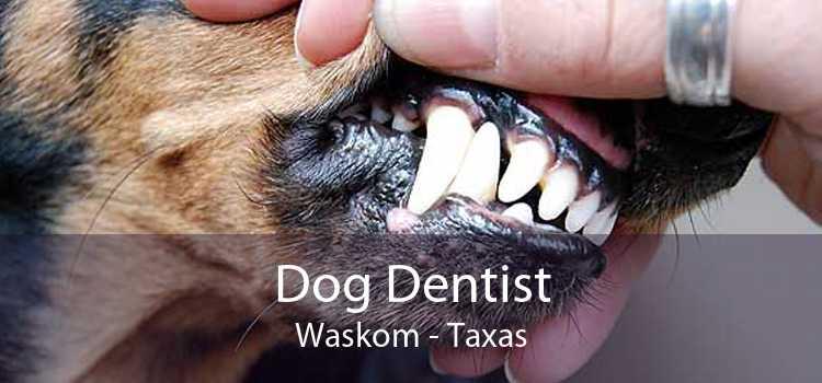 Dog Dentist Waskom - Taxas