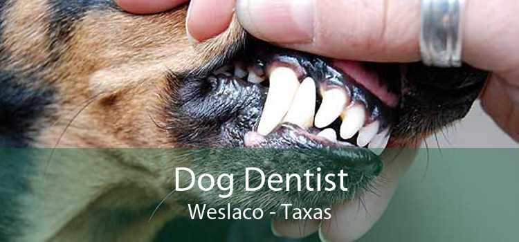 Dog Dentist Weslaco - Taxas