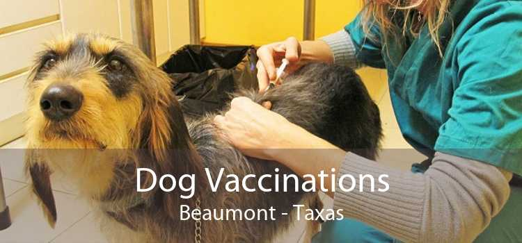 Dog Vaccinations Beaumont - Taxas