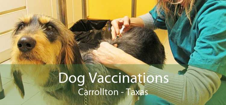 Dog Vaccinations Carrollton - Taxas