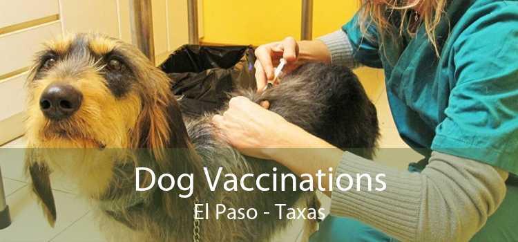 Dog Vaccinations El Paso - Taxas