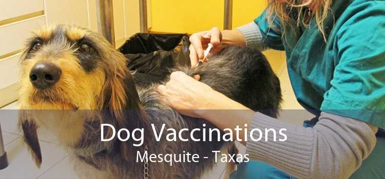 Dog Vaccinations Mesquite - Taxas