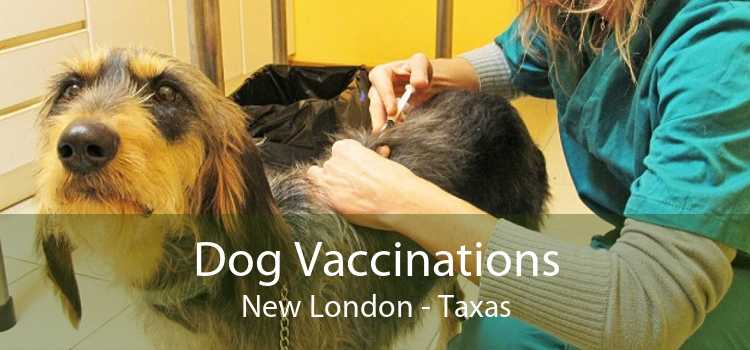 Dog Vaccinations New London - Taxas