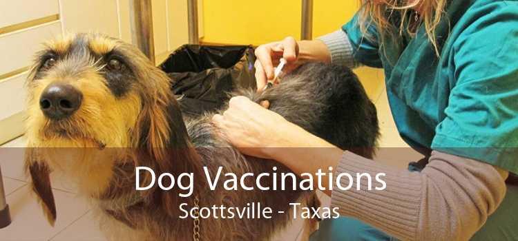 Dog Vaccinations Scottsville - Taxas