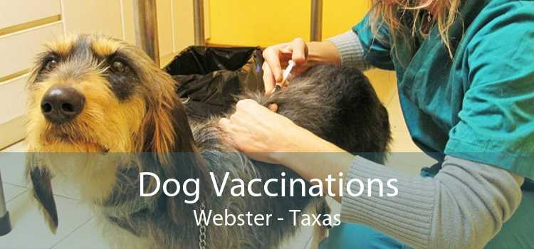 Dog Vaccinations Webster - Taxas