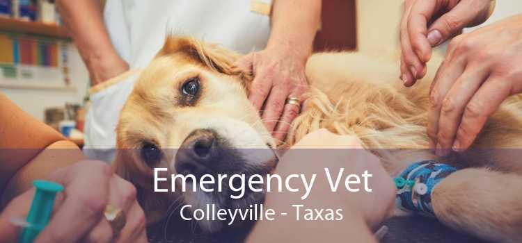 Emergency Vet Colleyville - Taxas