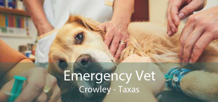 Emergency Vet Crowley - Taxas