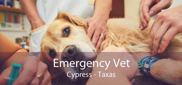 Emergency Vet Cypress - Taxas