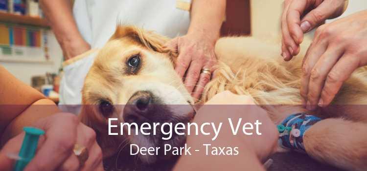 Emergency Vet Deer Park - Taxas