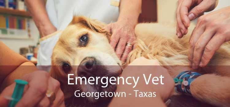 Emergency Vet Georgetown - Taxas