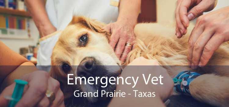 Emergency Vet Grand Prairie - Taxas