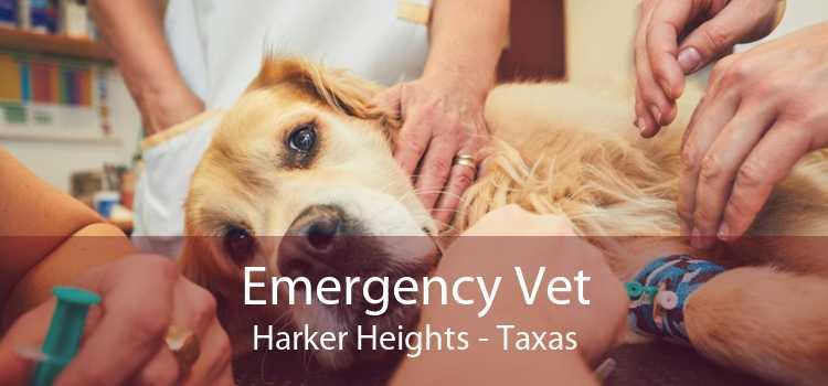 Emergency Vet Harker Heights - Taxas