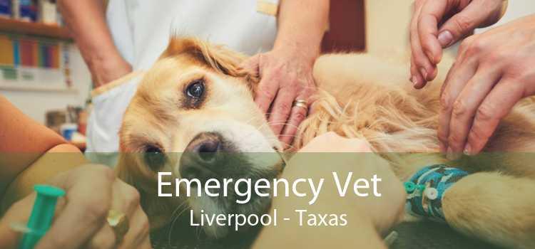 Emergency Vet Liverpool - Taxas