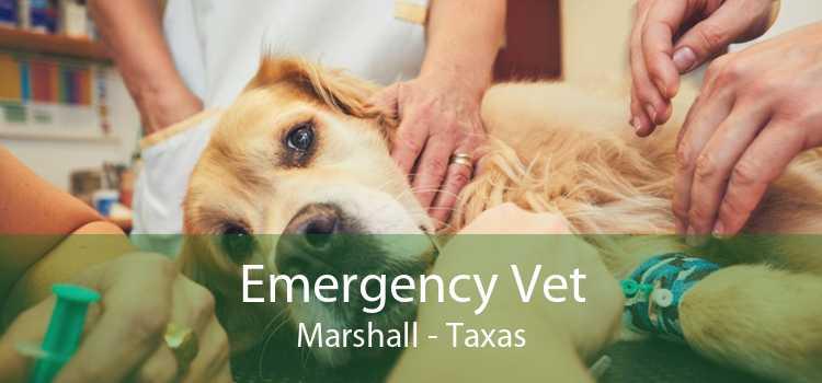 Emergency Vet Marshall - Taxas