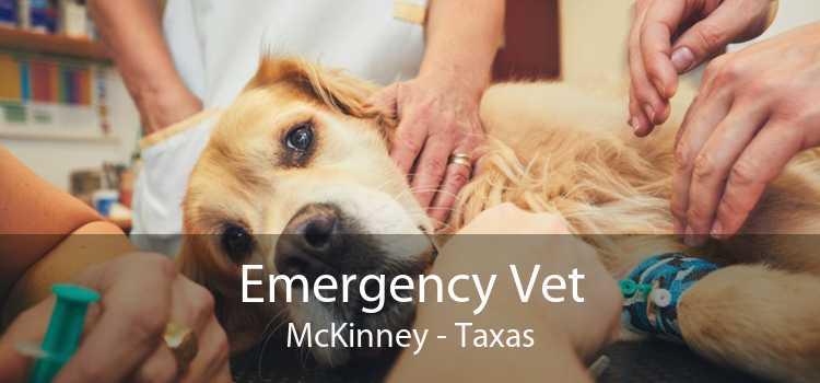 Emergency Vet McKinney - Taxas