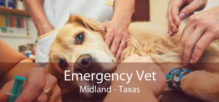 Emergency Vet Midland - Taxas