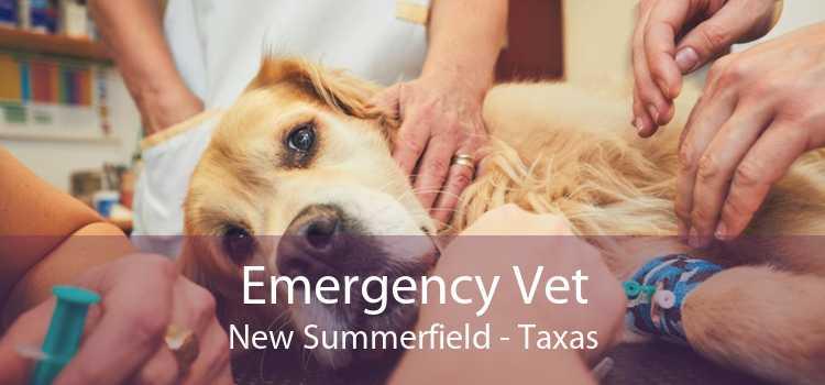 Emergency Vet New Summerfield - Taxas