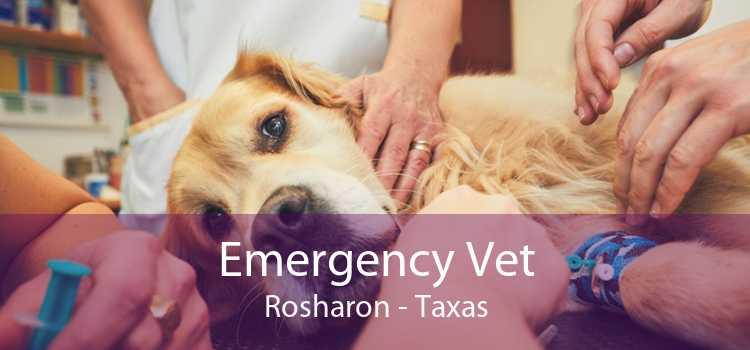 Emergency Vet Rosharon - Taxas