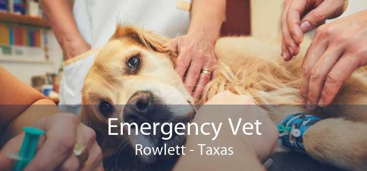 Emergency Vet Rowlett - Taxas