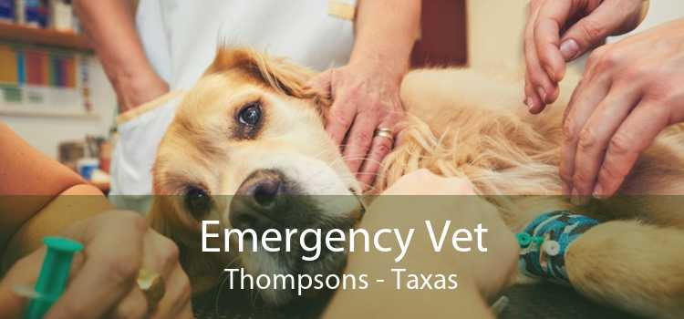 Emergency Vet Thompsons - Taxas