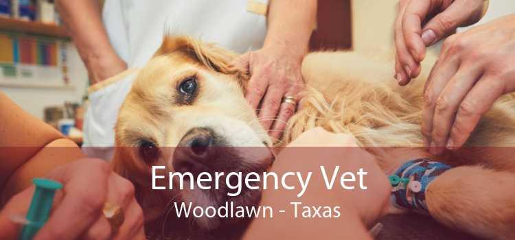 Emergency Vet Woodlawn - Taxas